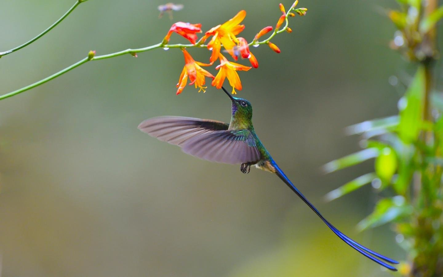 Download hd 1440x900 Hummingbird computer background ID:215794 for free