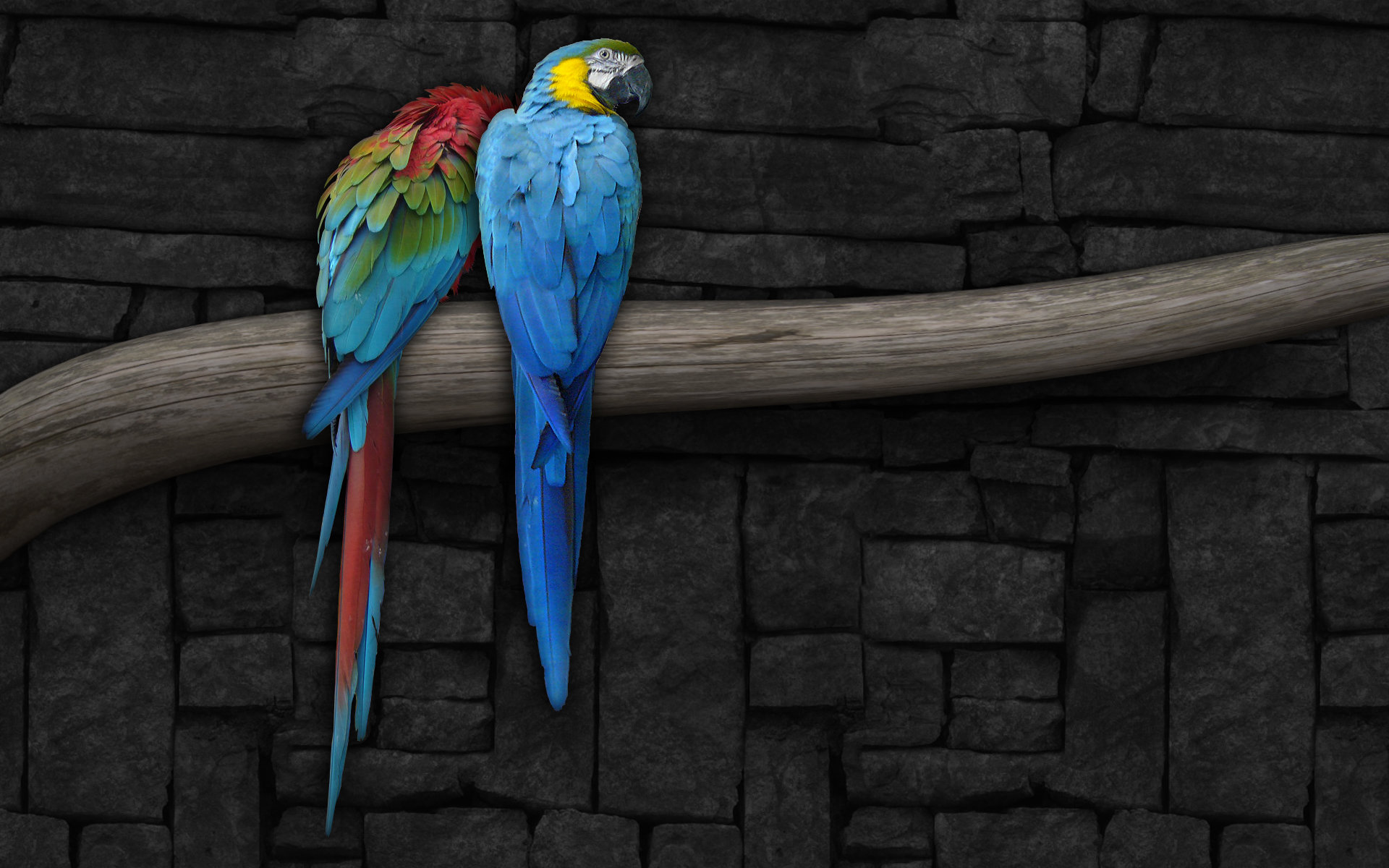 Free download Macaw wallpaper ID:46262 hd 1920x1200 for computer
