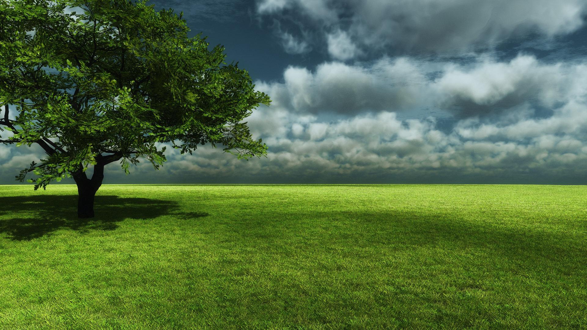 Best Tree Wallpaper Id76812 For High Resolution Full Hd