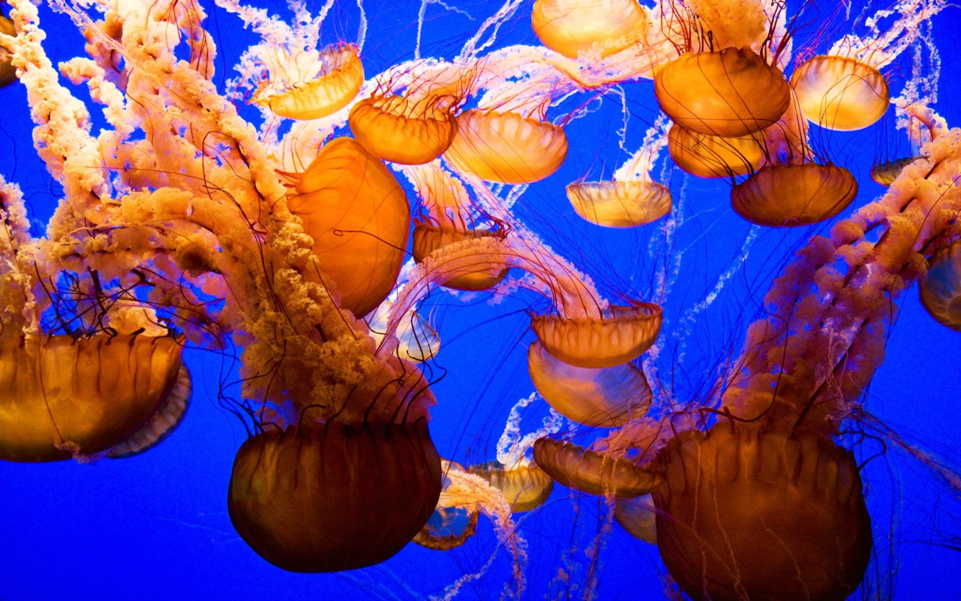 Free Jellyfish high quality background ID:199649 for hd 1920x1200 desktop