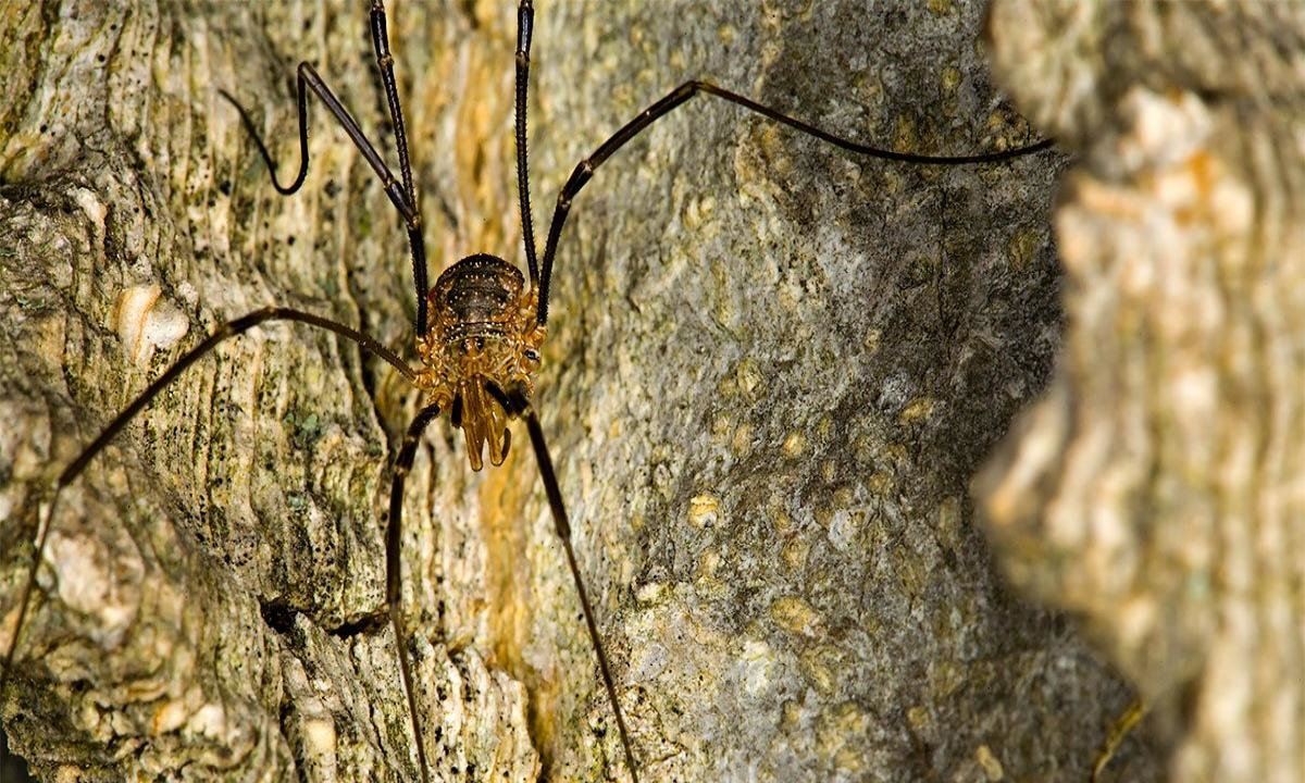High resolution Spider hd 1200x720 wallpaper ID:22210 for desktop
