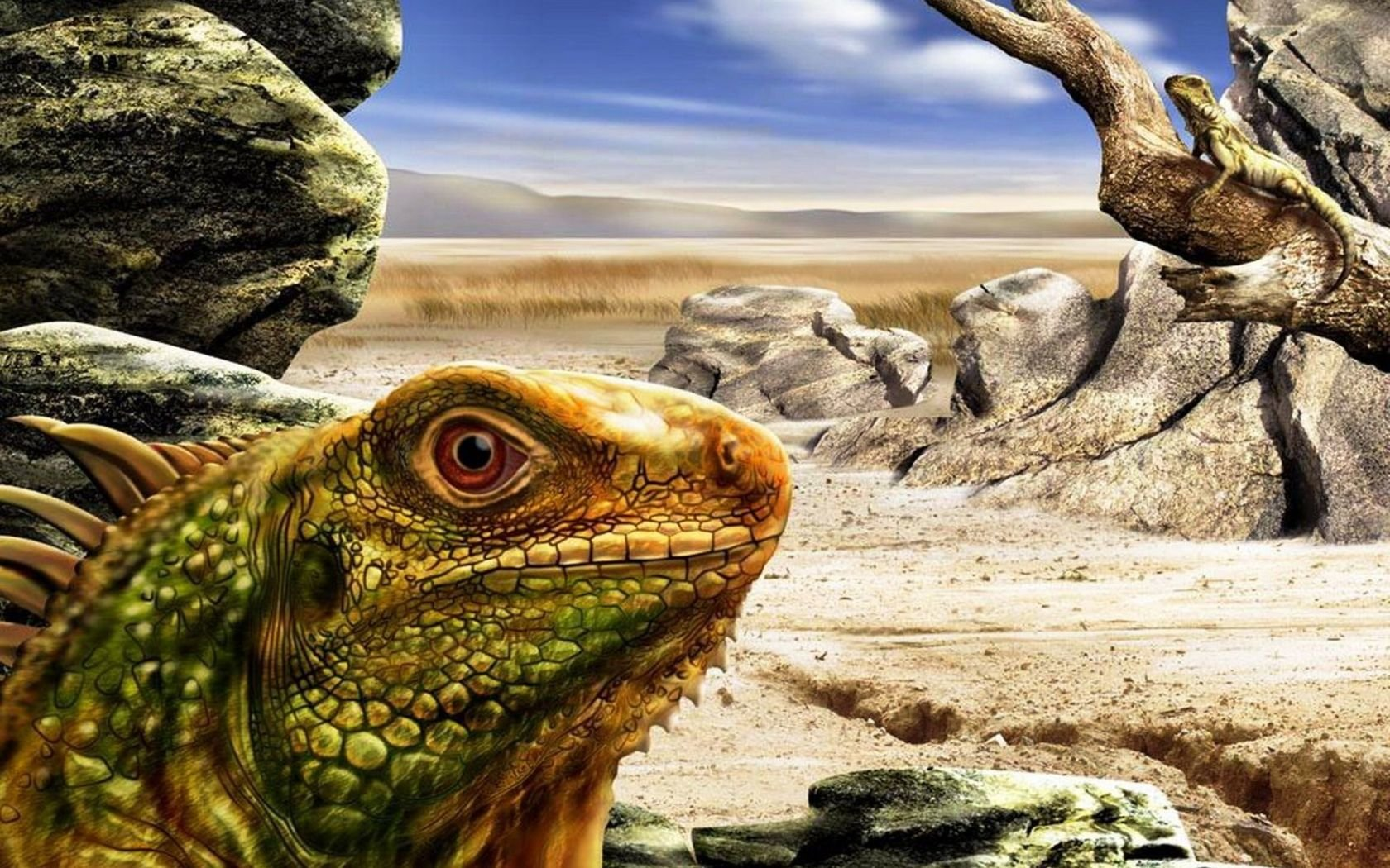 Free Iguana high quality background ID:380986 for hd 1680x1050 desktop