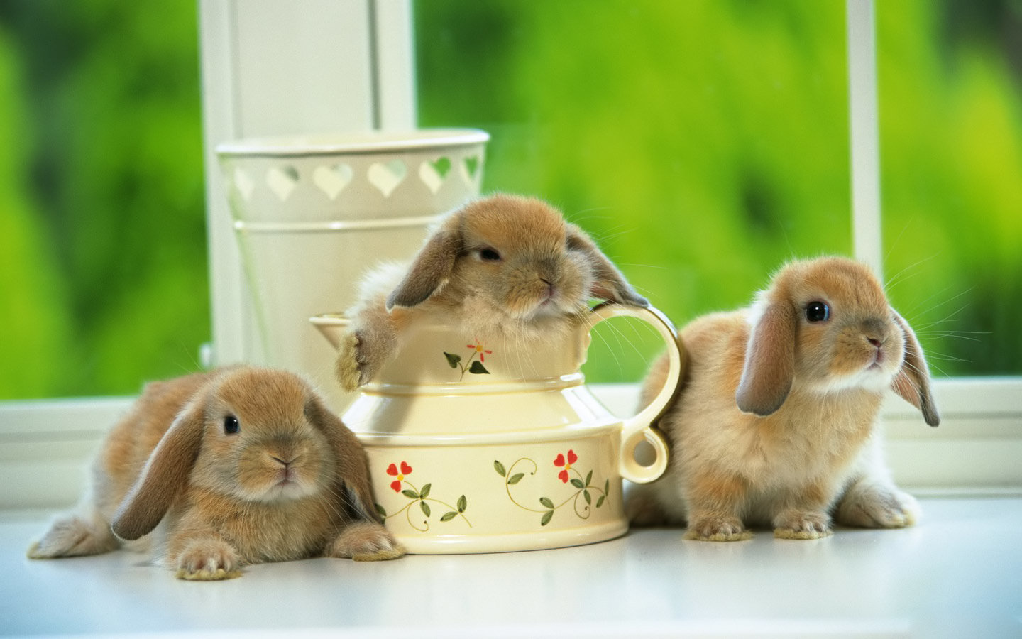 High resolution Rabbit & Bunny hd 1440x900 background ID:249064 for desktop