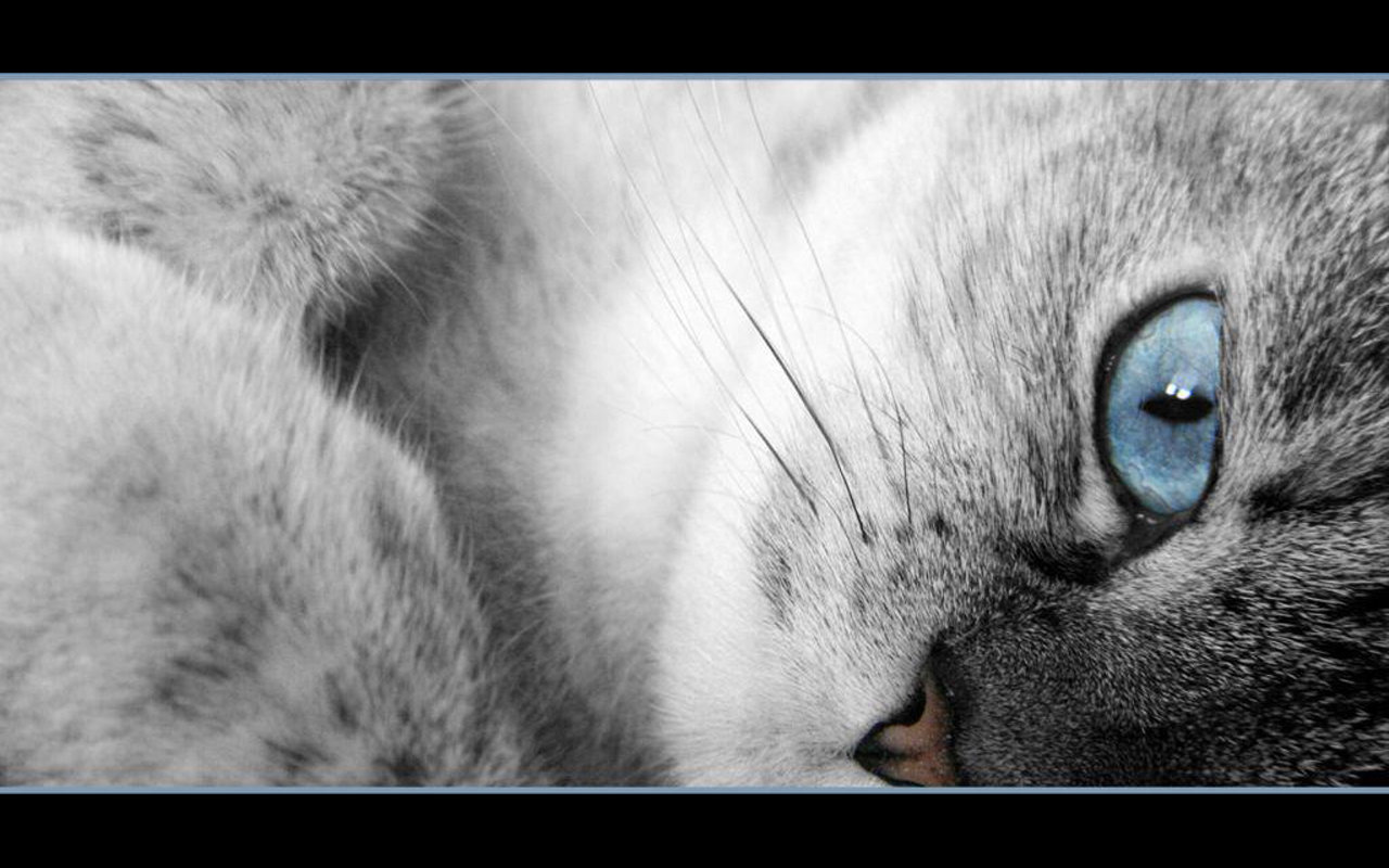 High resolution Cat hd 1280x800 wallpaper ID:428296 for desktop