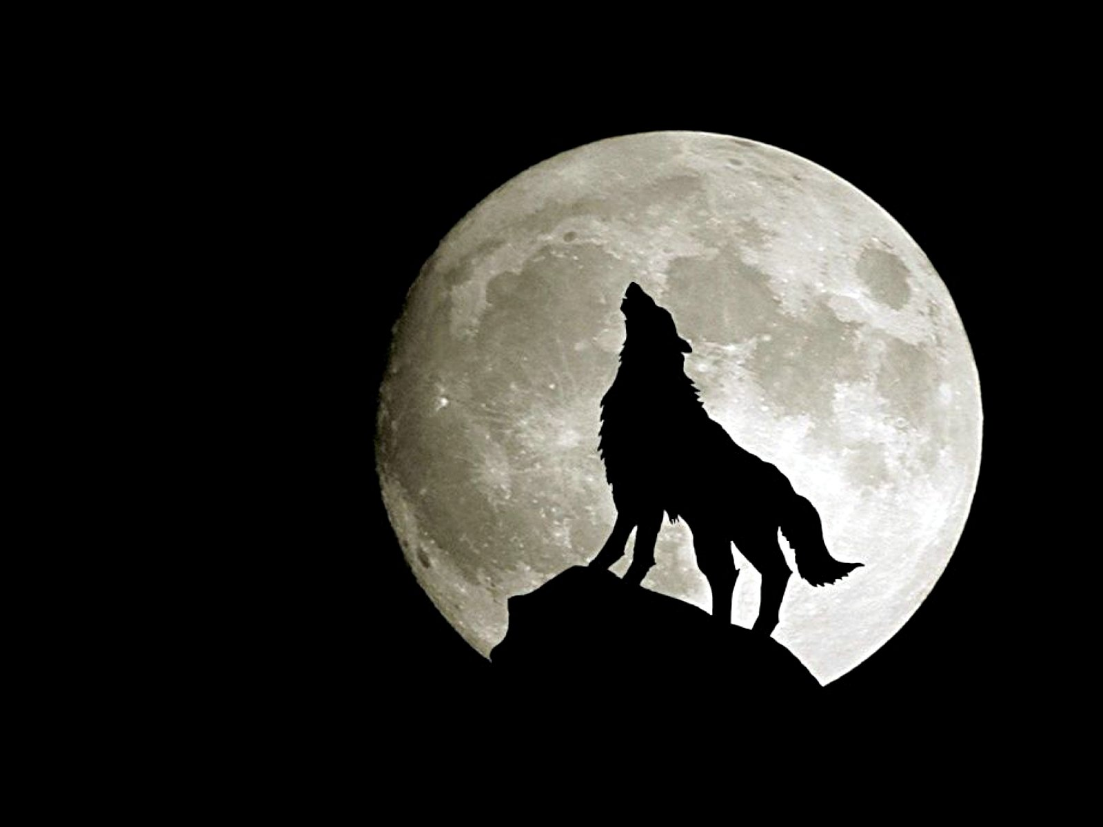 Free download Wolf wallpaper ID:117584 hd 1600x1200 for desktop