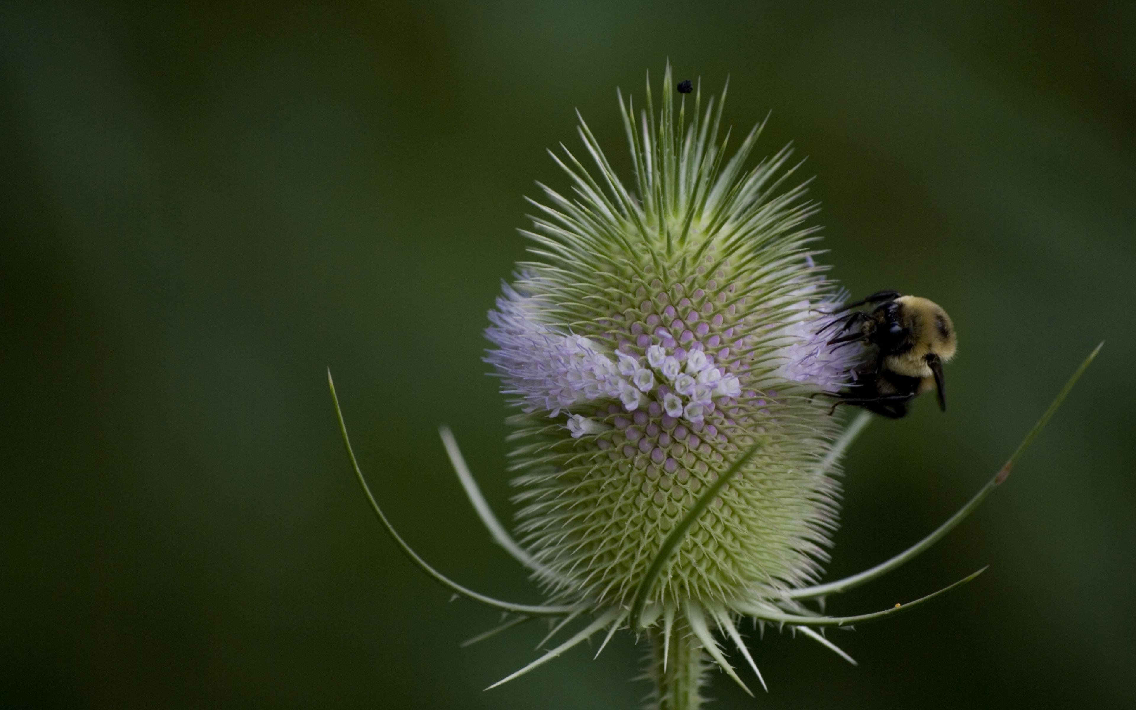 Free Bee high quality background ID:460898 for hd 3840x2400 desktop